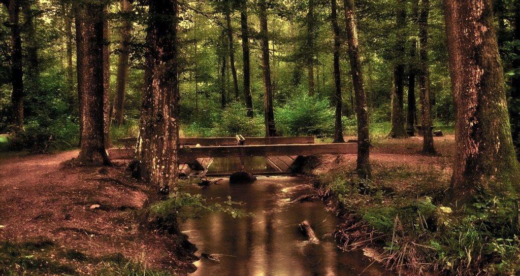 foret-ruisseau-sauvage-pont-arbre-nature