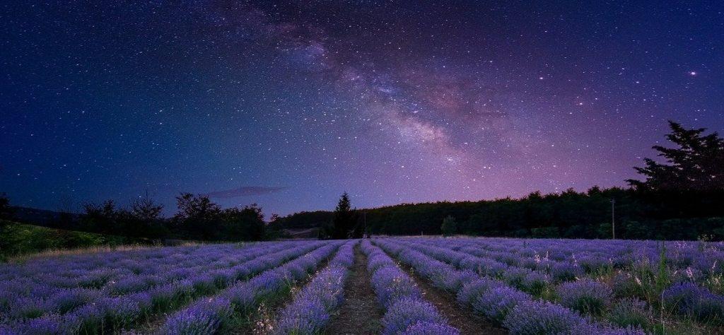 champ-lavande-étoiles-ciel