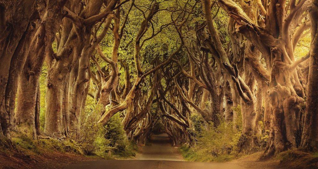 arbre-foret-paysage-chemin