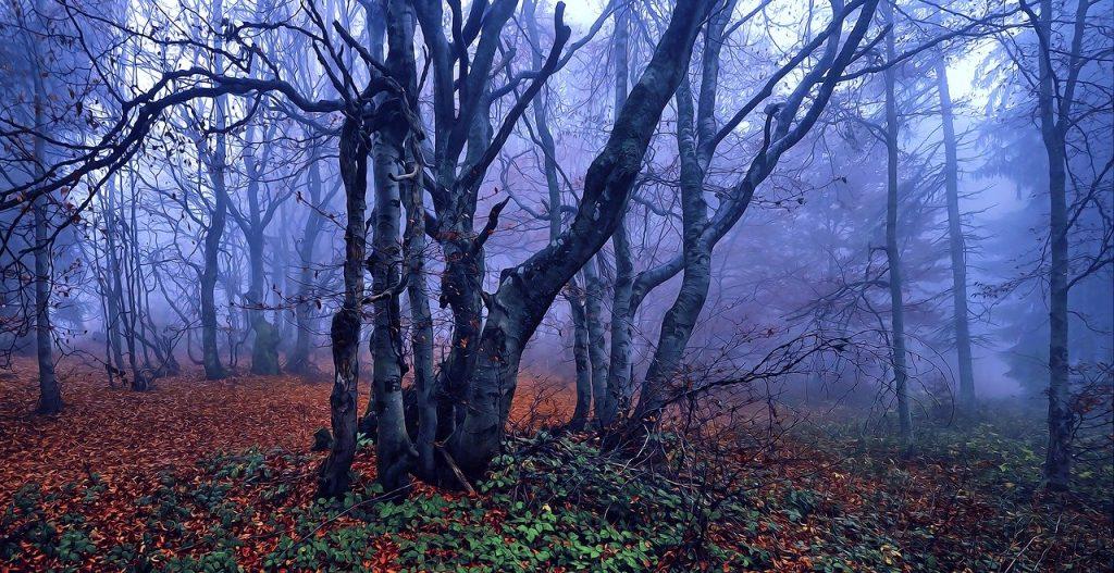foret-naturelle-arbre-feuilles-brouillard